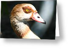 Egyptian Goose 2 Greeting Card