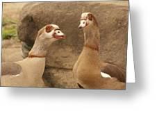 Egyptian Goose Greeting Card