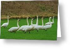 Eight Beautiful Swans Greeting Card