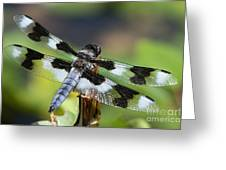 Eight-spotted Skimmer  Greeting Card