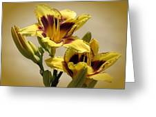 El Bandito Daylilies - Yellow  Greeting Card