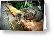 El Gato Iv Greeting Card