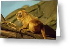 El Paso Zoo - Golden Lion Tamarin Greeting Card by Allen Sheffield