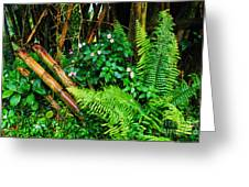 El Yunque National Forest Ferns Impatiens Bamboo Greeting Card