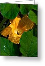 Eldorado For Bees Greeting Card