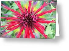 Electric Bee Balm Greeting Card