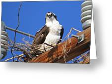 Electric Blue Osprey Greeting Card