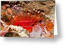 Electric Clam Greeting Card