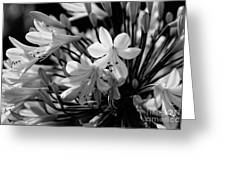 Elegance - Bw Greeting Card
