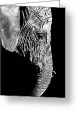 Elegant Elephant Greeting Card
