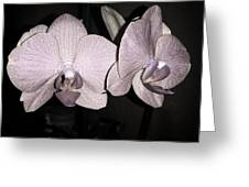 Elegant Orchid Greeting Card