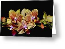 Elegant Orchid On Black Greeting Card