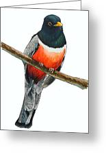 Elegant Trogon Greeting Card