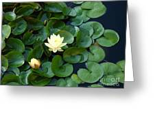 Elegant Water Lily Greeting Card