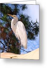 Elegant White Crane Greeting Card