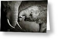 Elephant Affection Greeting Card