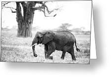 Elephant And Baobab Greeting Card