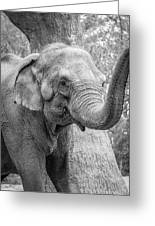 Elephant And Tree Trunk Black And White Greeting Card