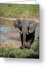 Elephant At The River Greeting Card