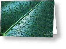 Elephant Ear Leaf Greeting Card