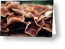 Elephant Ear Mushroom Family Greeting Card