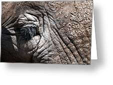 Elephant Eye Greeting Card