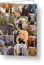 Elephant Faces Greeting Card