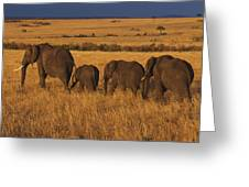 Elephant Family - Sunset Stroll Greeting Card