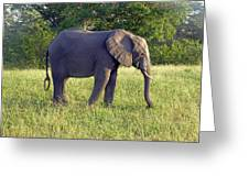 Elephant Feeding Greeting Card