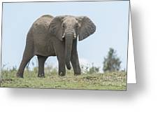 Elephant Forward On Mound Greeting Card