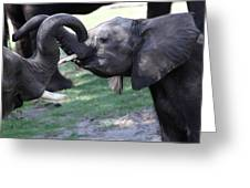 Elephant Greeting II Greeting Card