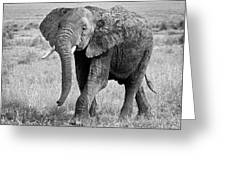 Elephant Happy And Free In Black And White Greeting Card