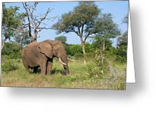 Elephant Heaven Greeting Card