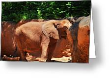 Elephant In Red Clay Greeting Card