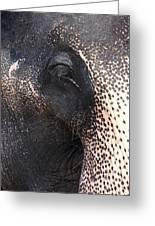 Elephant Greeting Card by Jane Rix