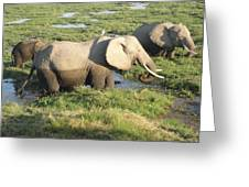 Elephant Mother And Calves Greeting Card