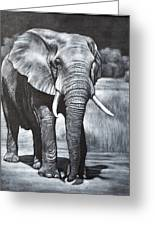 Elephant Night Walker Greeting Card