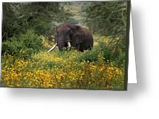 Elephant Of The Crater Greeting Card