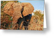 Elephant On Approach Greeting Card