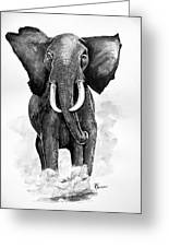 Elephant Greeting Card