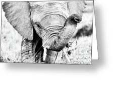 Elephant Portrait In Black And White Greeting Card