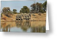 Elephant Refelction Greeting Card