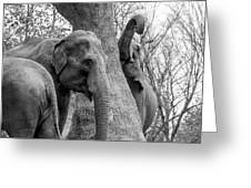 Elephant Tree Black And White  Greeting Card
