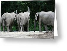 Elephant Trio Greeting Card