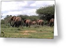 Elephant Walk Tsavo National Park Kenya Greeting Card
