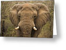 Elephant Watching Greeting Card