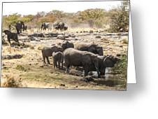 Elephant Watering Hole Greeting Card