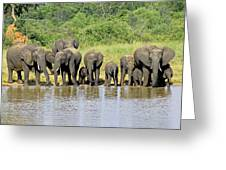 Elephants At The Waterhole   Greeting Card