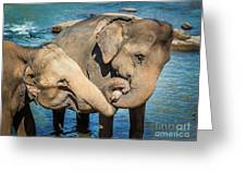 Elephants Bathing In A River Greeting Card