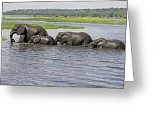 Elephants Crossing Chobe River Greeting Card